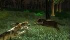 Untamed Life Of A Cougar